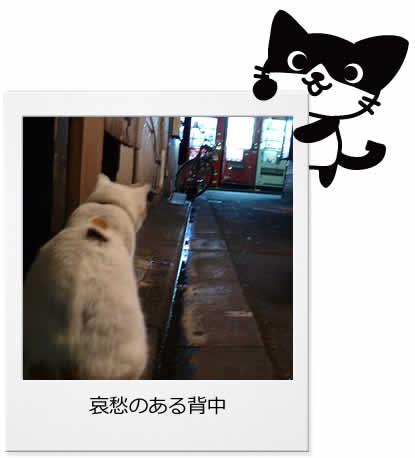 ゴールデン街のネコ