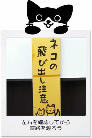 がん治郎ポラロイド 猫飛び出し注意.jpg